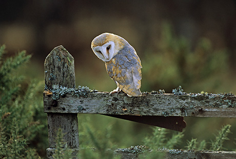 Click to see a selection of owls