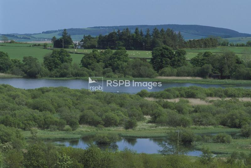 Overview of site from north side, Loch of Kinnordy RSPB reserve, Scotland ...