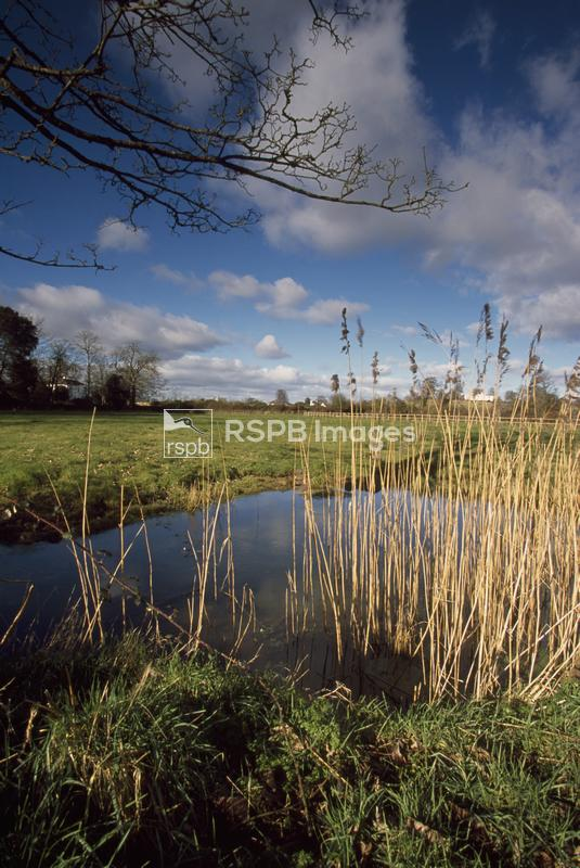 Bowling Green Marshes RSPB reserve, general views, February 2003 ...