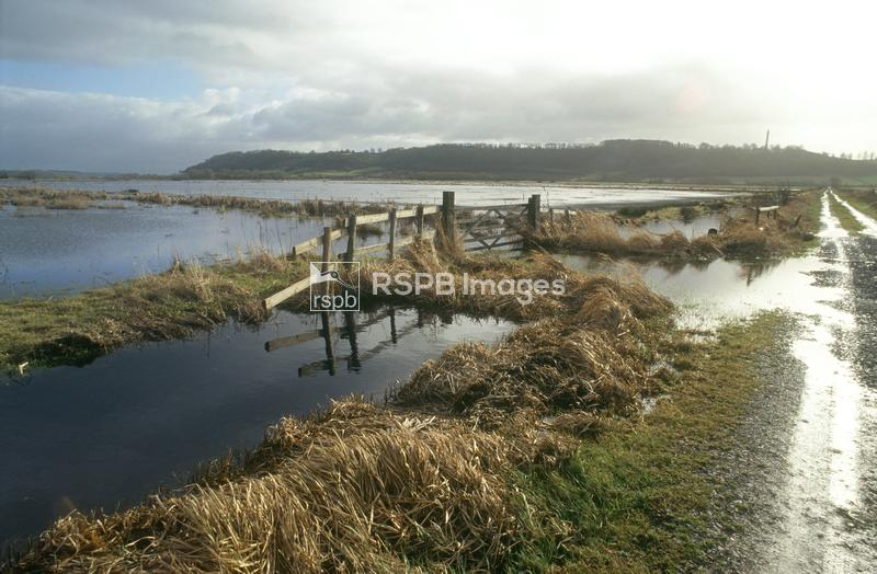 West Sedgemoor RSPB reserve, flooded meadows, rhynes and drove ...