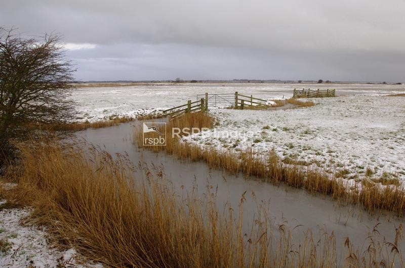 Grazing marsh in winter at Berney Marshes RSPB reserve. Yare Valley, Norfol ...