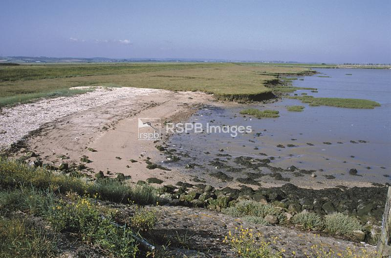 Proposed Cliffe airport site/reserve. Mud flats at low tide. ...