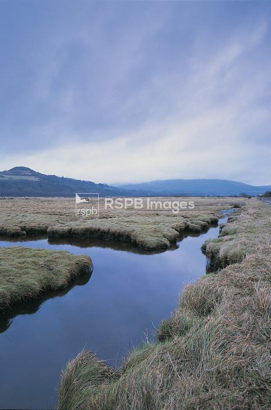 Mersehead RSPB Reserve, Scotland February 1999. View across marsh towards h ...