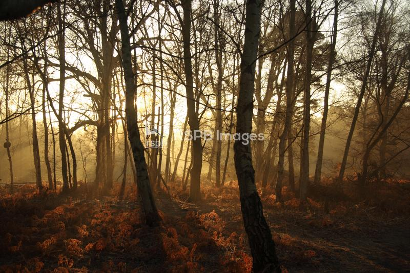 Woodland sunrise taken at RSPB Headquarters, The Lodge, Sandy, Bedfordshire ...