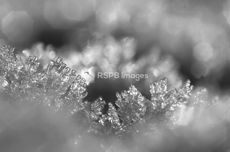 Ice formations on a frosty morning, Kent, November ...