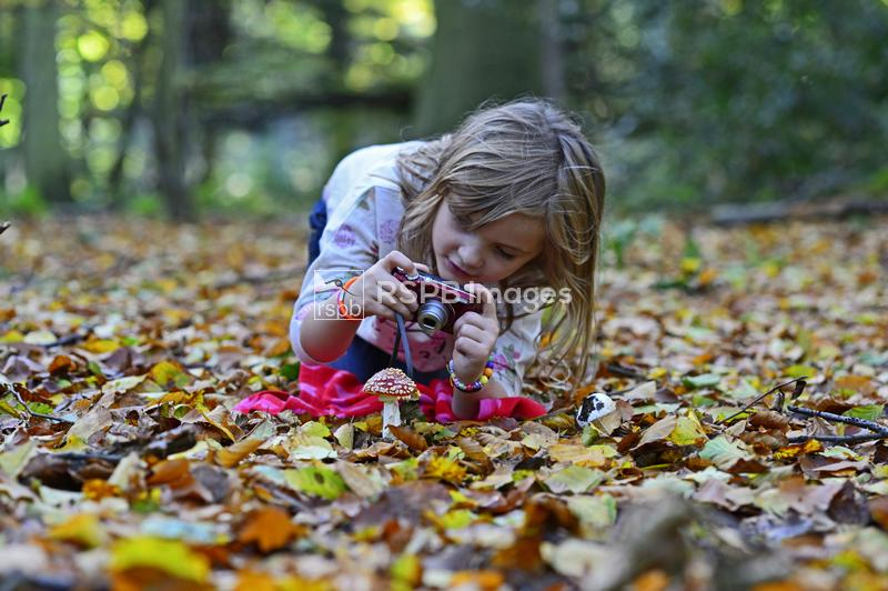 Young girl photographing a Fly agaric in woodland in autumn, Norfolk, Octob ...