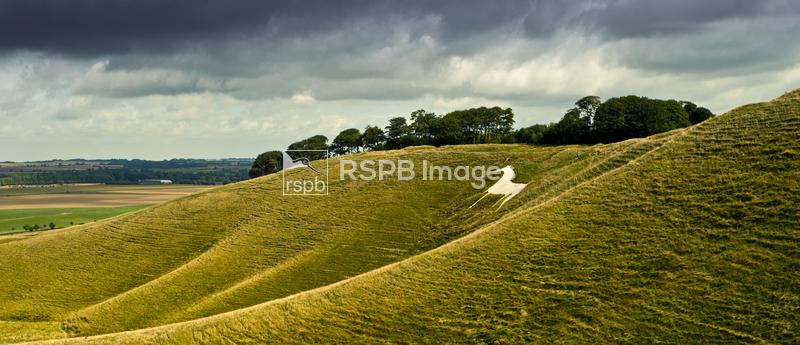 Cherhill White Horse, view of hills with 18th Century carved chalk horse, O ...