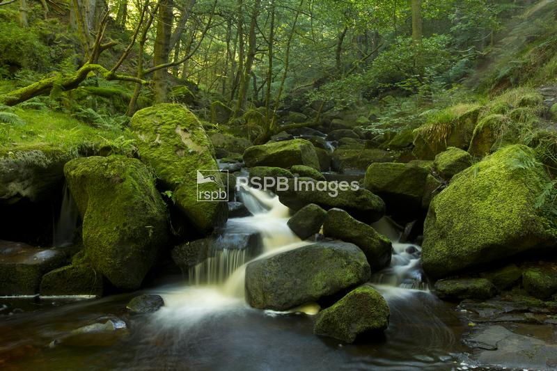Burbage Brook, river flowing over rocks with surrounding woodland, Padley G ...