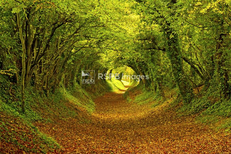 Autumnal woodland path, Sussex, England, October ...