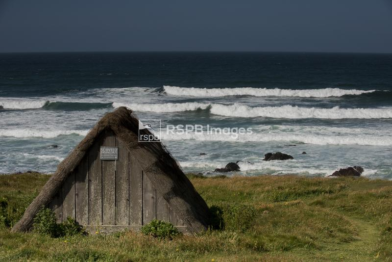 Seaweed Drying Hut, on the coast, Freshwater West, Pembrokeshire, June ...