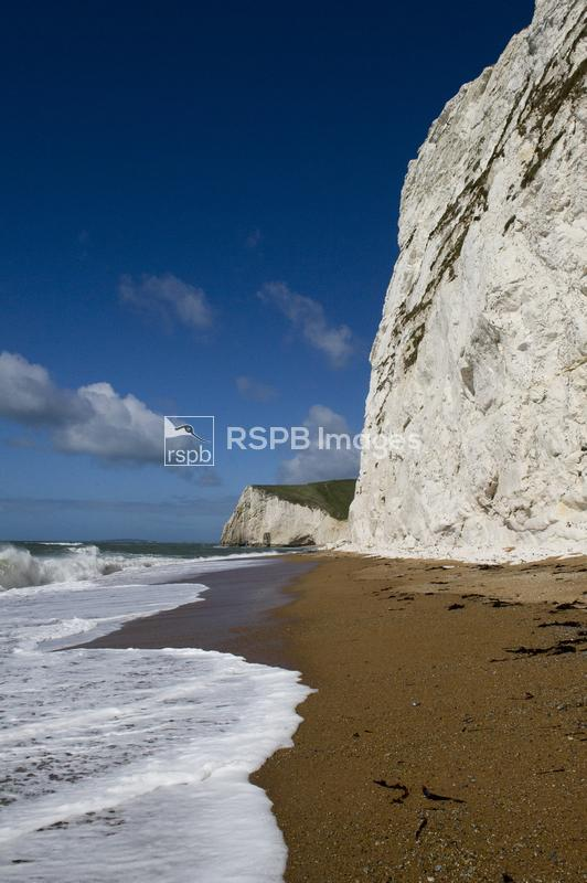 Cretaceous Chalk cliffs, near to Swyre Head and Durdle Door, Dorset, April ...