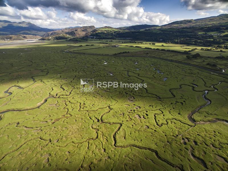 Saltmarsh viewed from above with small meandering drainage tributaries, Gla ...