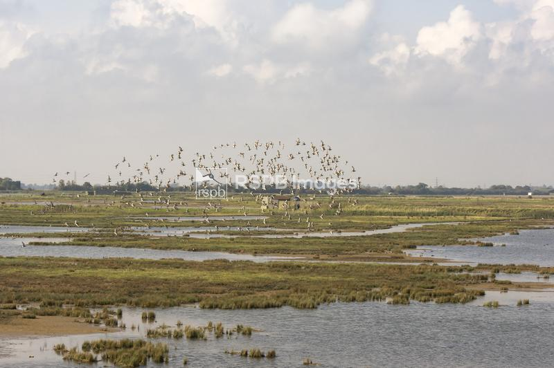 View from the sea bank across to the east hide at RSPB Frampton marsh with  ...