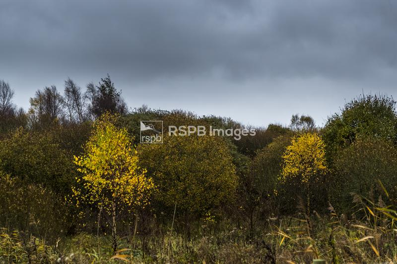 Autumn colours in the scrub margins, RSPB Reserve Newport Wetlands, Gwent L ...