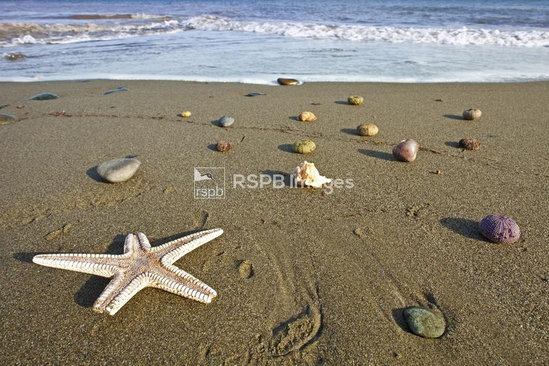 Shoreline with washed up starfish and sea urchins, Andalucia, Spain, March ...